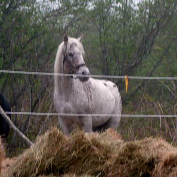 Natural Horse Boarding