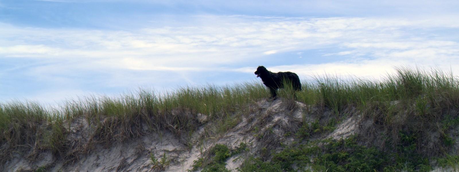 Alfie on the beach